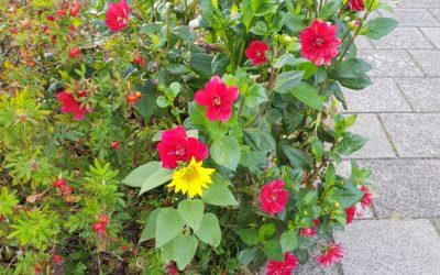 Wijk Boerenburg in de bloemen